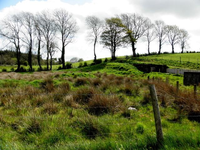 Rushy ground, Doogary