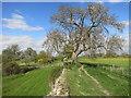 SU6362 : Path along the Roman Wall by Des Blenkinsopp