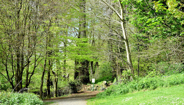 Spring, Killynether Wood, Newtownards (May 2015)