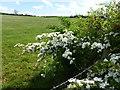 TF0008 : Grassland near Great Castertin, Rutland by Richard Humphrey