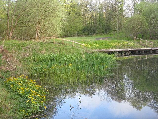 Campbridge Park pool