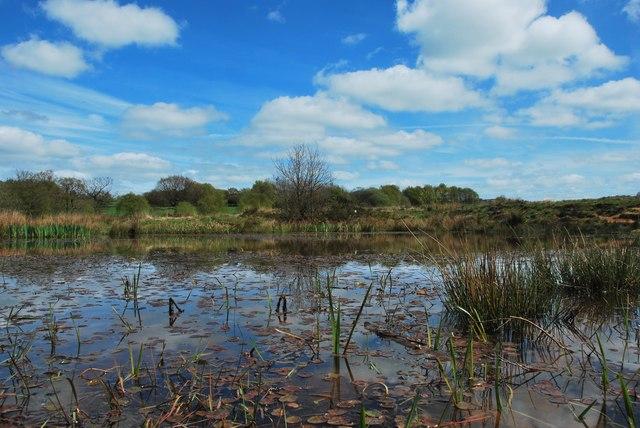 Wetley Moor Common