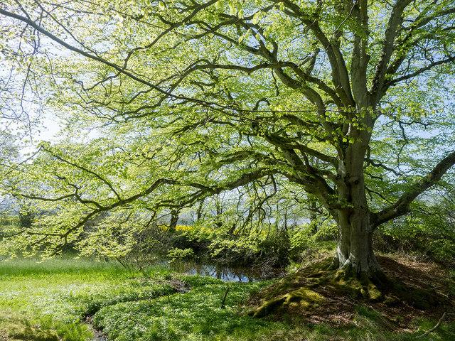 The lochan in Drummondreach Oak Wood