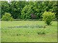 TQ2896 : Marshy Area near Driveway, Trent Park, Cockfosters, Hertfordshire by Christine Matthews