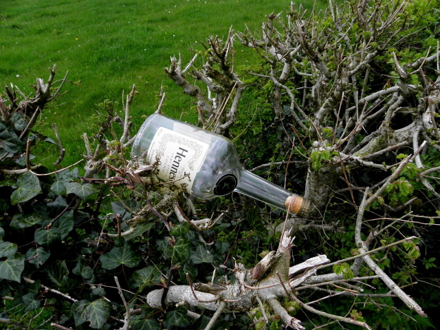 Whiskey bottle in a hedge, Mullaghmore