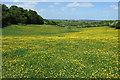SP4902 : Buttercups on Boars Hill by Philip Jeffrey