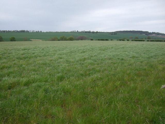 Crop field near Nether Hailes
