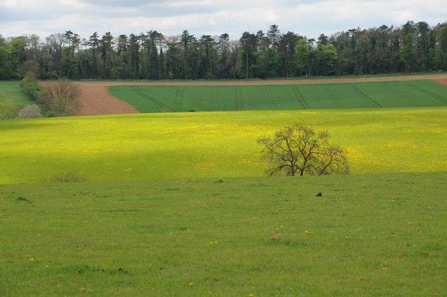 Colours in a Cotswold Landscape