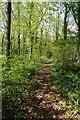 SP1434 : A woodland footpath by Philip Halling