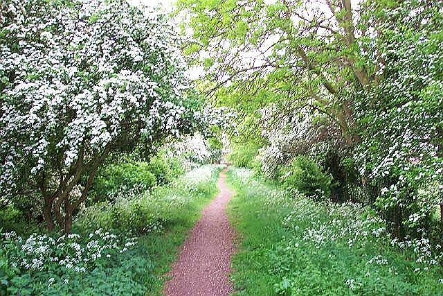 May blossom at Bourne, Lincolnshire