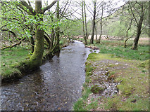 NY3200 : Guards Beck, downstream view by Pauline E