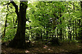 TQ4351 : Woodland in the Spring by Peter Trimming