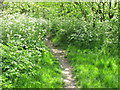 TQ2282 : Cow parsley in light woodland, Wormwood Scrubs by David Hawgood
