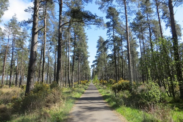 Barrington Muir Plantation