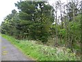 NZ2484 : Woods beside track by Russel Wills