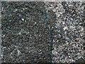 NS4377 : A lichen - Placynthium nigrum by Lairich Rig
