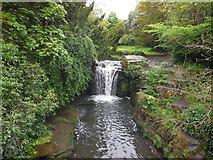 NZ2567 : Waterfall, Jesmond Dene by Paul Gillett