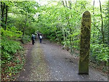 SX5994 : Ball Hill Footpath, part of the Tarka Trail, Okehampton by David Smith