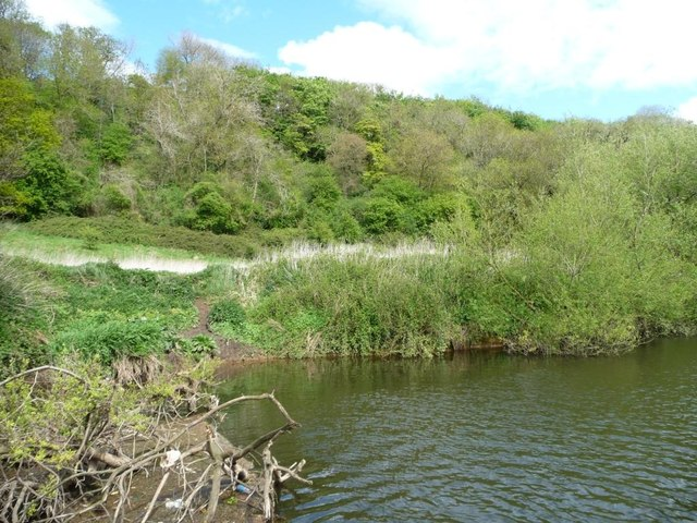 North bank of the River Avon, below Cleeve Wood