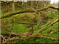NY6616 : Footbridge in Hoff Lunn by David Medcalf