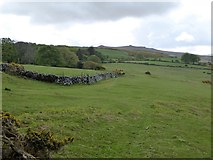 SX6093 : Boundary wall on West Cleave by David Smith