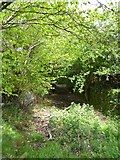 SX6194 : Overgrown track on Tor Down by David Smith