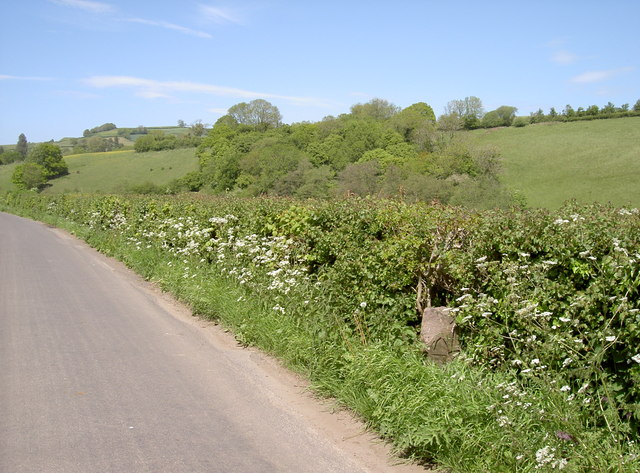 Across to Hammerhill Wood