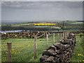 SE2304 : Royd Moor by Steve