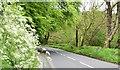 J3268 : Spring verge, Minnowburn, Belfast (May 2015) by Albert Bridge