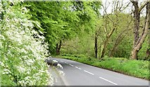 J3268 : Spring verge, Minnowburn, Belfast (May 2015) by Albert Bridge