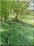 SE0722 : Nettles and Himalayan balsam on Sowerby bridge FP81, Norland by Humphrey Bolton