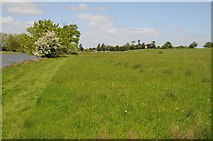 SO8843 : Path beside Croome River by Philip Halling