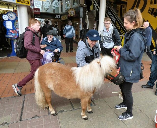 Petting pony in Ashton