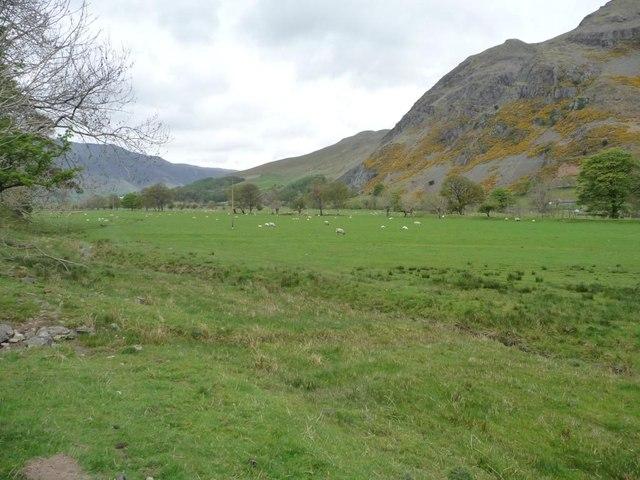 Sheep in St John's in the Vale