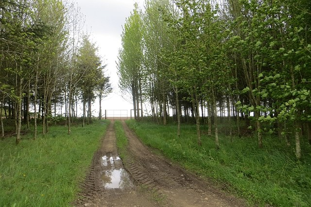 Strip wood, Balcormo