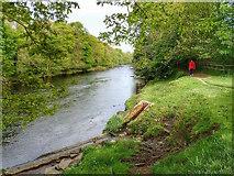 NZ0615 : River Tees by Mick Garratt