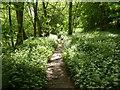 SO8066 : Ransoms in Shrawley Wood by Jeff Gogarty