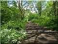 ST2078 : Path in Howardian Nature Reserve, Cardiff by Robin Drayton