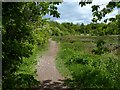 ST2079 : Path in Howardian Nature Reserve, Cardiff by Robin Drayton