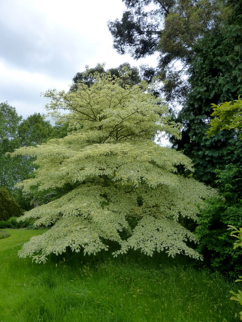 Copton Ash Garden, Faversham