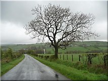 NY2436 : The Road to Uldale, looking north-east by Christine Johnstone