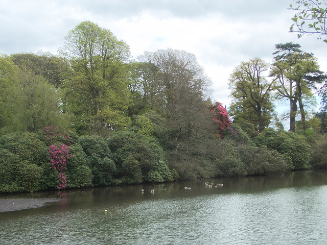 Spring trees and shrubs by Margam Lake