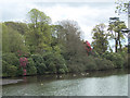 SS8086 : Spring trees and shrubs by Margam Lake by eswales