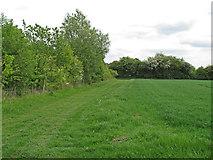 TL9350 : Field margin on arable land, Preston St Mary by Roger Jones