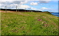 NT9855 : Berwickshire Coastal Path beside the East Coast Mainline by Chris Heaton