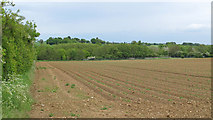 TL9748 : Looking over arable land to sewage works, Monks Eleigh by Roger Jones