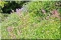 SO5355 : A springtime verge by Philip Halling