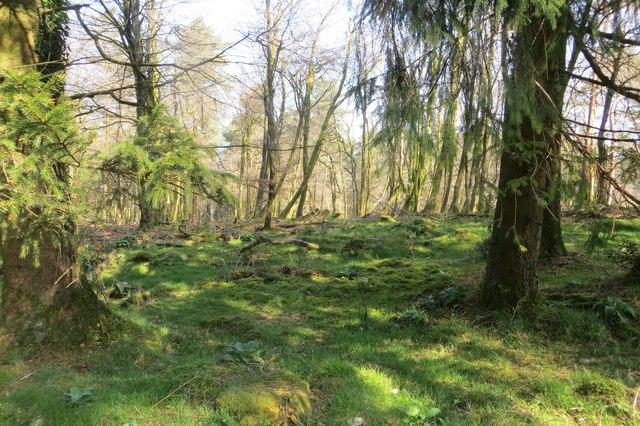 Staple Hill Plantations