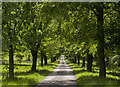 SJ8257 : The tree lined avenue to Rode Hall by Ian Greig