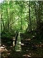 TQ3331 : Boardwalk, Horsebridge Wood by Simon Carey